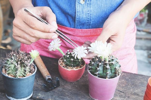 Jardinagem de cactos na planta de vaso na mesa de madeira, cor flim