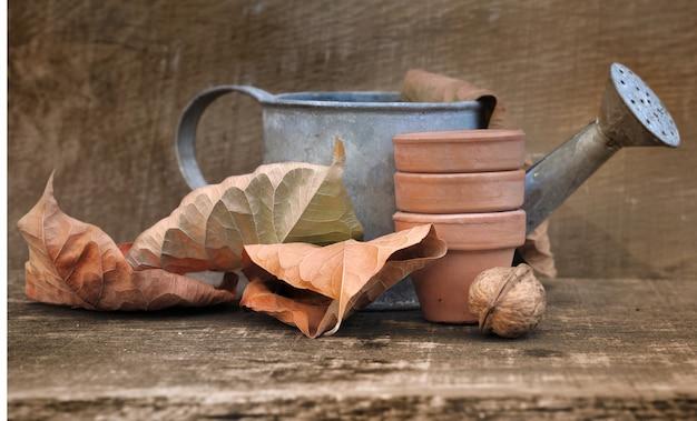 Jardinagem de outono