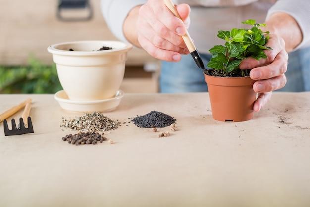 Jardinagem do apartamento. homem envolvido em vasos de plantas. planta de casa com solo e ferramentas de jardim.