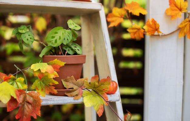 Jardinagem doméstica. planta de casa verde em panela de barro localizada no pátio. decoração de casa aconchegante