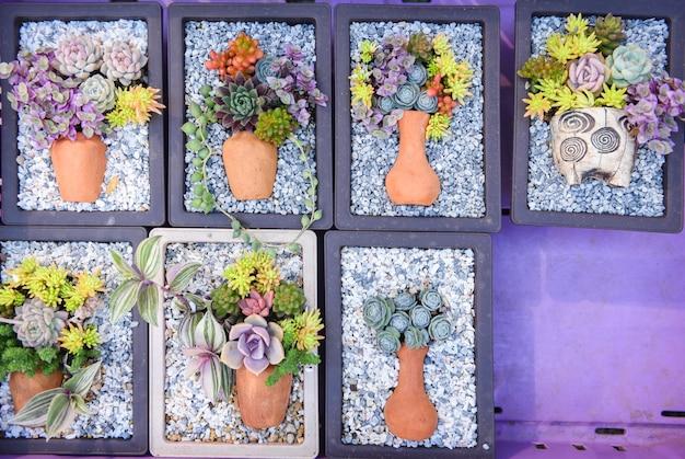 Jardinagem em casa com bela planta suculenta em pote para decorar em casa ou escritório de mesa de trabalho
