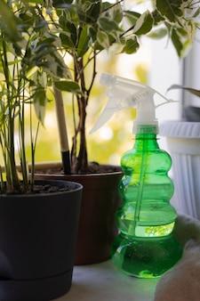 Jardinagem em casa com planta