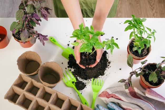 Jardinagem em casa. mãos de mulher com mesa de broto