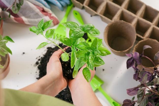 Jardinagem em casa. mulher, mãos, com, broto, tabela