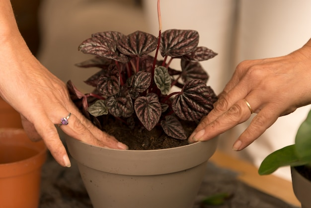Jardinagem em casa realocando a planta da casa