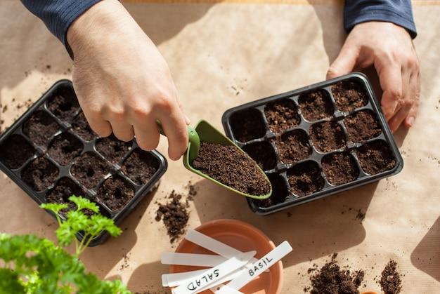 Jardinagem, plantando em casa. homem semeando sementes em caixa de germinação