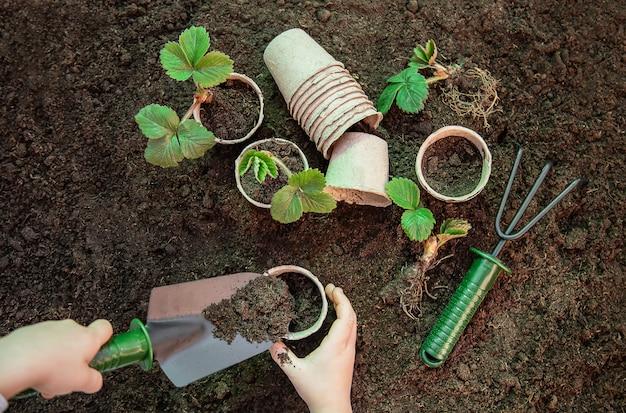 Jardinagem, plantio de plantas no jardim. jardim. foco seletivo.