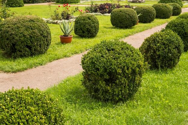Jardine com arbustos dos arbustos e gramados verdes, projeto da paisagem.
