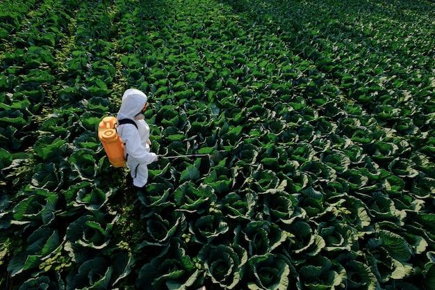 Jardineira com roupa de proteção e máscara pulveriza fertilizante em uma enorme planta de repolho