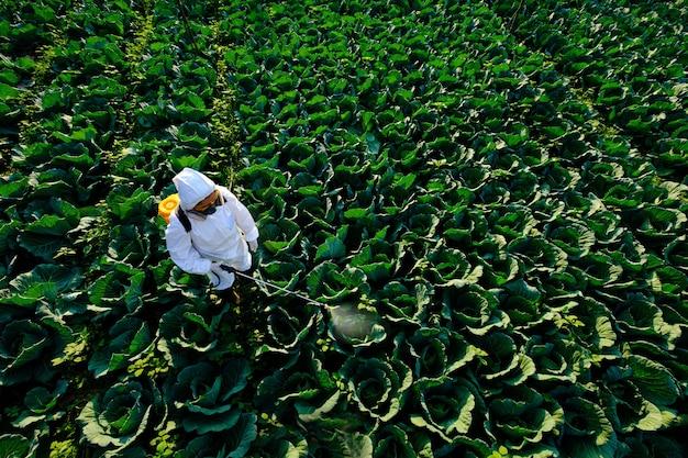 Jardineira com roupa de proteção e máscara pulveriza inseticida e produtos químicos em uma enorme planta de repolho