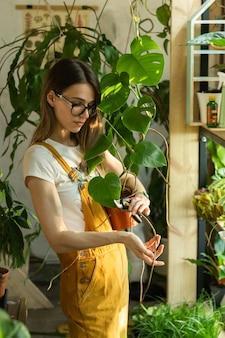 Jardineira cortando folhas de planta de casa com tesouras de podar cuidando de plantas em jardim interno com estufa