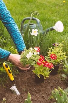 Jardineira está plantando flores vermelhas e brancas de verbena em um canteiro de jardim usando uma pá