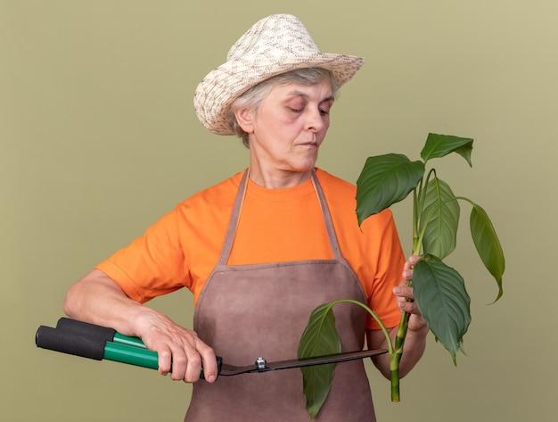 Jardineira idosa confiante usando chapéu de jardinagem, cortando galho de planta com tesoura de jardinagem