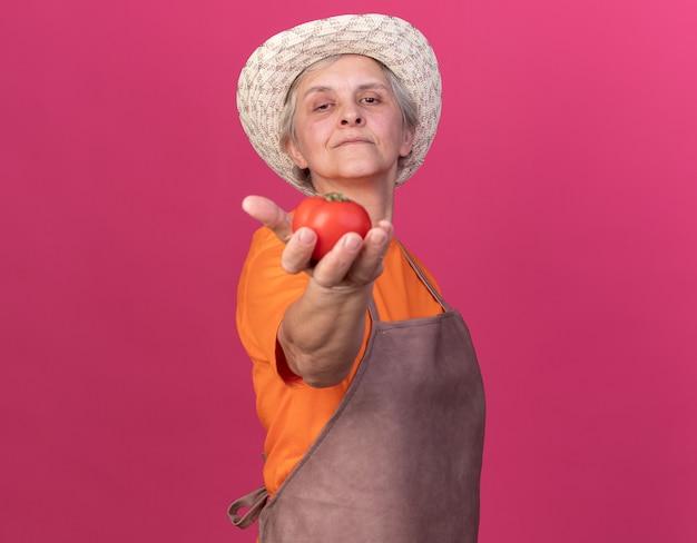 Jardineira idosa confiante usando chapéu de jardinagem segurando tomate isolado na parede rosa com espaço de cópia