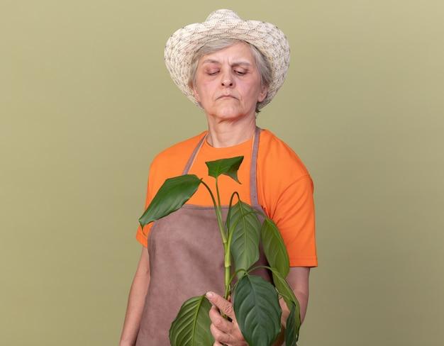 Jardineira idosa confiante usando luvas e chapéu de jardinagem segurando e olhando para o galho da planta