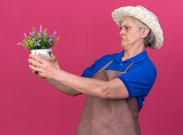 Jardineira idosa confusa usando chapéu de jardinagem, segurando e olhando para um vaso de flores isolado na parede rosa com espaço de cópia