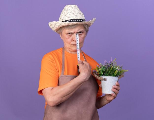 Jardineira idosa, descontente, usando um chapéu de jardinagem, segurando um vaso de flores e uma fita métrica isolada na parede roxa com espaço de cópia