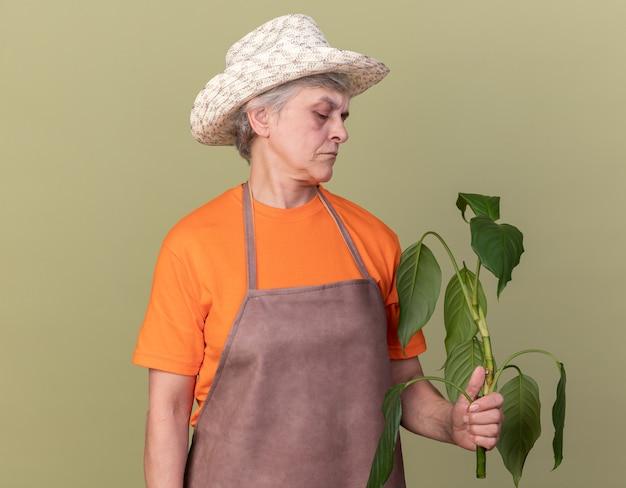 Jardineira idosa séria usando chapéu de jardinagem, segurando e olhando para o galho da planta