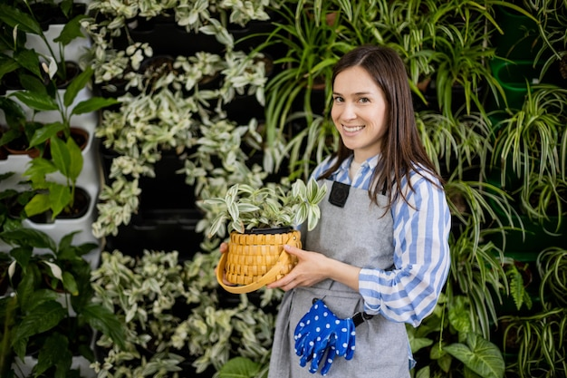 Jardineira sorridente perto de fitomódulo de vegetação vertical segurando tradescantia em uma caixa de palha