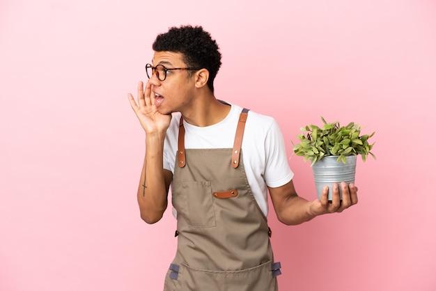 Jardineiro africano segurando uma planta isolada em um fundo rosa gritando com a boca aberta para o lado