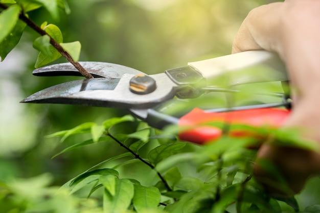 Jardineiro asiático tesouras de poda de árvore para cortar galhos na natureza da planta. hobby plantar horta doméstica.