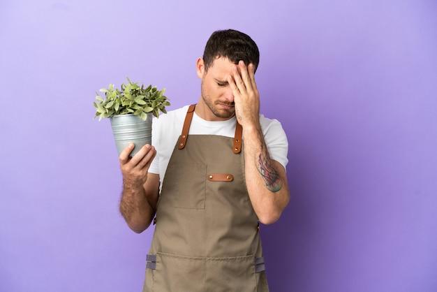 Jardineiro brasileiro segurando uma planta sobre fundo roxo isolado com expressão de cansaço e doentia