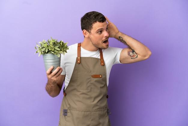 Jardineiro brasileiro segurando uma planta sobre um fundo roxo isolado, ouvindo algo colocando a mão na orelha