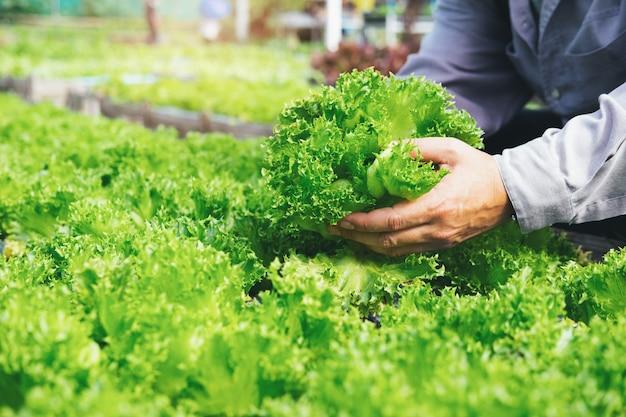 Jardineiro colheita legumes da horta em casa.