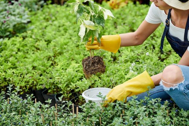Jardineiro colocando planta no vaso