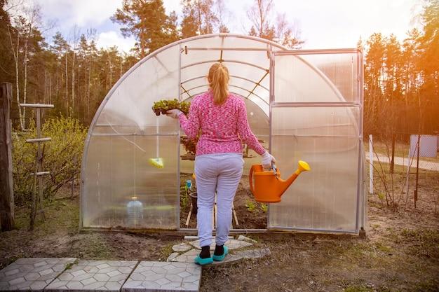 Jardineiro com luvas domésticas plantando uma flor em um dia ensolarado de estufa, vista traseira