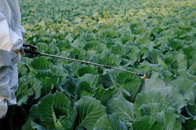 Jardineiro com roupa de proteção pulveriza inseticida e química na planta de repolho