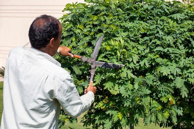 Jardineiro corta folhas de árvore com tesoura no verão poda de árvore com tesoura