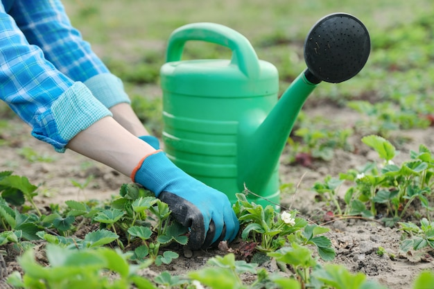 Jardineiro cultiva o solo com ferramentas manuais, jardinagem de primavera