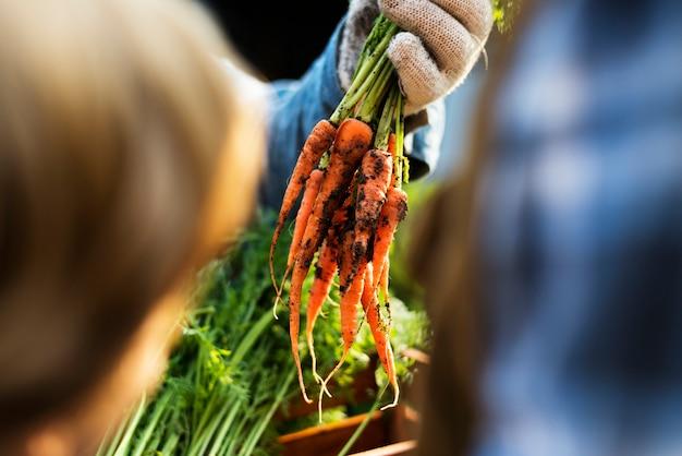 Jardineiro dá cenouras agrícolas orgânicas frescas ao cliente