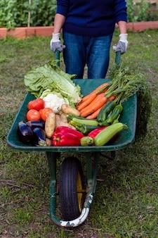 Jardineiro de alto ângulo, segurando o carrinho de mão com legumes