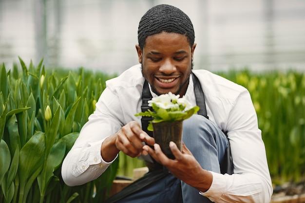 Jardineiro de avental. cara africano em uma estufa. flores em uma panela.