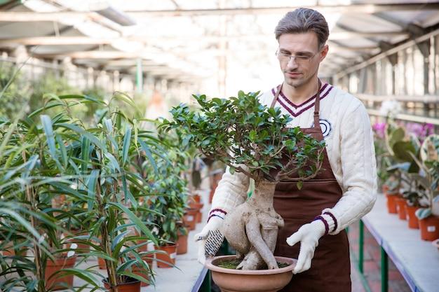 Jardineiro de homem bonito com avental marrom e luvas de jardim segurando uma árvore de bonsai em um vaso em uma estufa