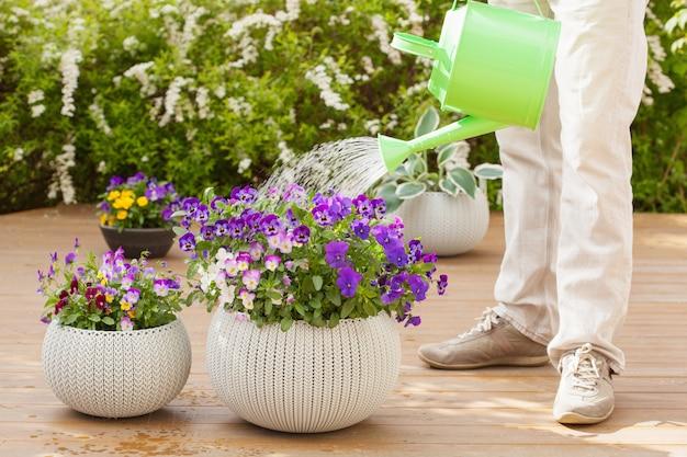 Jardineiro de homem regando flores de amor-perfeito no jardim
