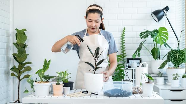 Jardineiro de mulher asiática em roupas casuais, cuidar das plantas e borrifar água com um borrifador nebuloso para as plantas na mesa da sala em casa durante uma atividade de passatempo, conceito de horta