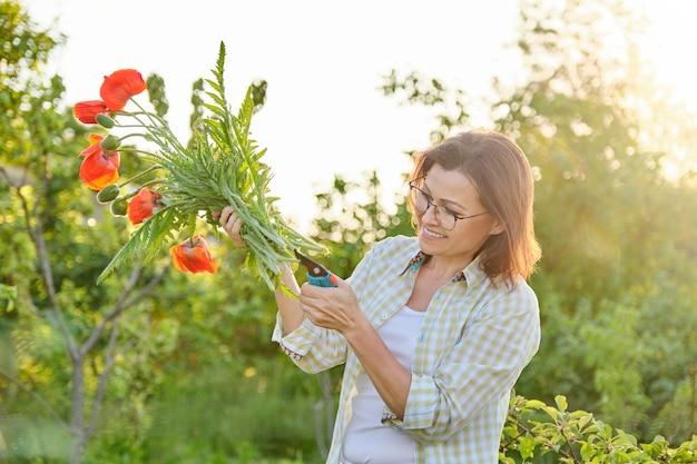 Jardineiro de mulher cortando papoulas de flores vermelhas com tesouras de jardim, dia de sol no jardim de primavera, feliz linda fêmea madura com buquê