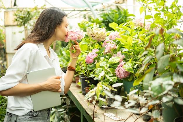 Jardineiro de mulheres de negócios atraente jovem com tablet cheira flores de hortênsia em estufa.