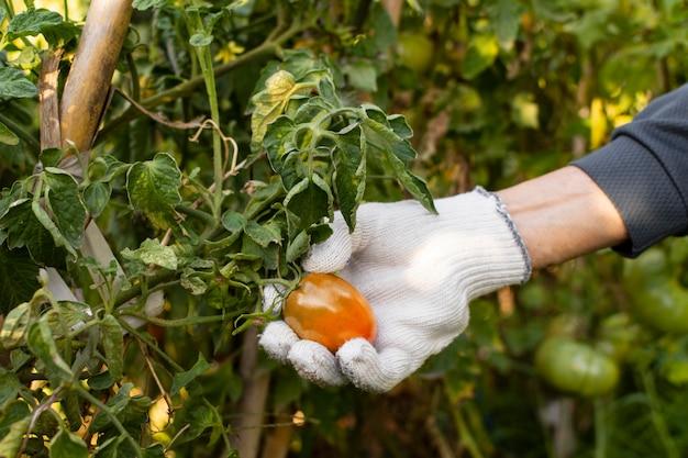 Jardineiro de perto com plantas