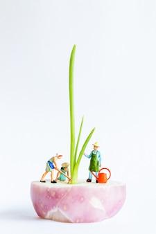 Jardineiro em miniatura, colheita de cebolinha no fundo branco