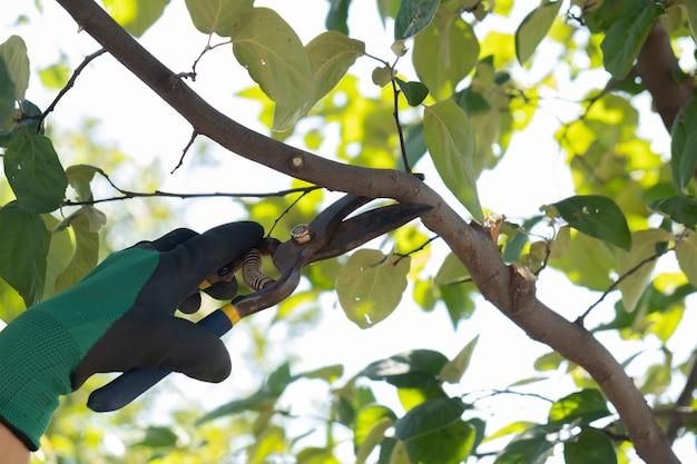 Jardineiro enluvado podando árvores com tesouras de poda