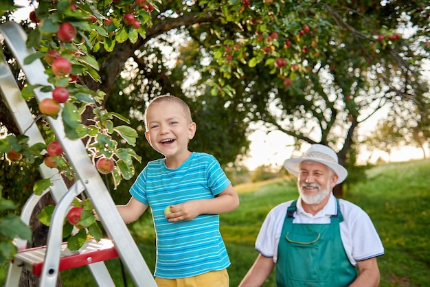 Jardineiro feliz que olha seu neto que está na escada no jardim.