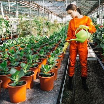 Jardineiro feminino pulverização de água em vasos de plantas em estufa