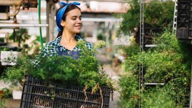 Jardineiro feminino segurando o caixote com plantas frescas