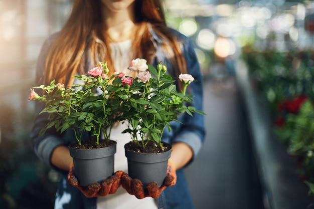 Jardineiro feminino segurando rosas pequenas em vasos. fechar-se.