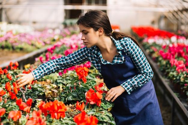 Jardineiro feminino trabalhando na estufa