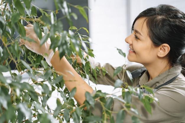 Jardineiro feminino, verificando as plantas e limpando os galhos secos de uma planta de casa com uma poda.